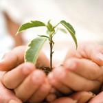 Как самостоятельно создать благотворительный фонд?